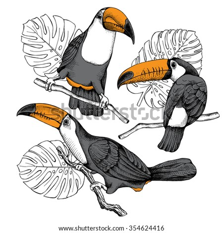 A set of illustrations of the birds toucans on the branches. Vector illustrations. - stock vector