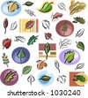 A set of leaf vector icons in color, and black and white renderings. - stock vector