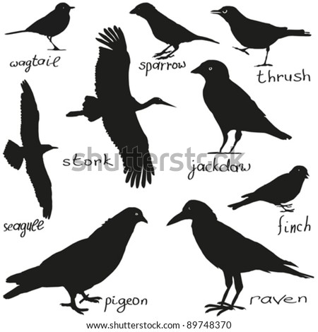 A set of silhouettes of different birds in black - stock vector