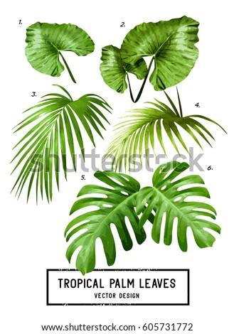 A set of vector isolated tropical jungle green palm leaves.