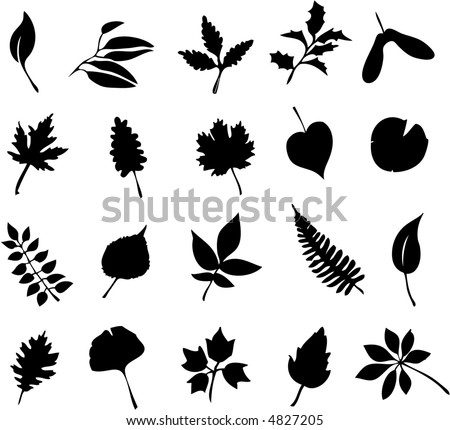 A study of leaves including maple, oak, fern, ash, laurel, holly, linden, ginkgo, and more - stock vector