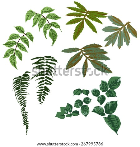 A variety of green leaves set, vector - stock vector