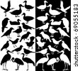 A vector collection of birds silhouettes (Black and White) - stock vector