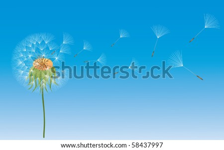 A vector dandelion in wind on blue background. - stock vector