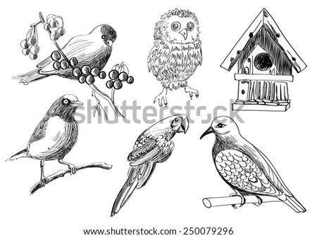 A vector hand drawn illustration set of birds and a birdhouse - stock vector
