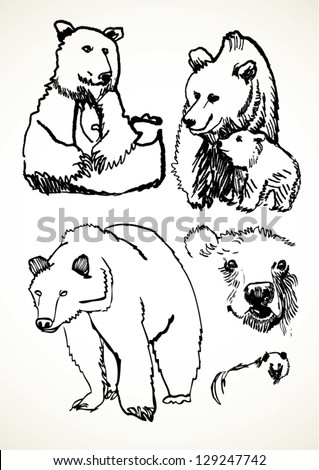 A vector illustration of bear sketches. - stock vector