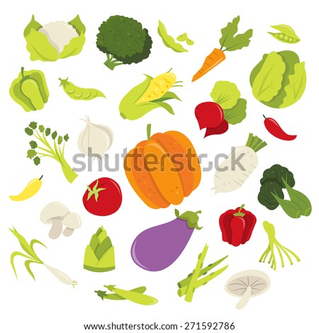 A vector illustration of fresh organic vegetables collection like cauliflower, broccoli, peas, carrot, green pepper, red pepper, chilli, cabbage, corn, turnip, tomato, herbs, mushroom and kale. - stock vector