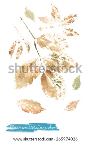 A vector watercolor: painting of autumn leaves of ash tree and wild grape made as watercolor monotype - stock vector