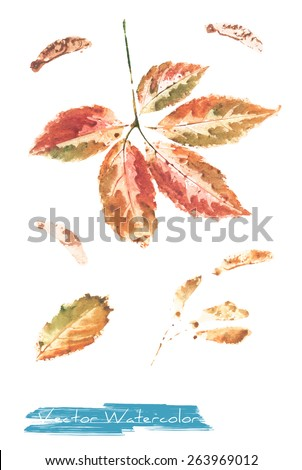 A vector watercolor: painting of autumn leaves of wild grape made as watercolor monotype - stock vector
