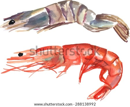 A watercolour drawing of two shrimps, one pink and one tiger, scalable vector graphic - stock vector