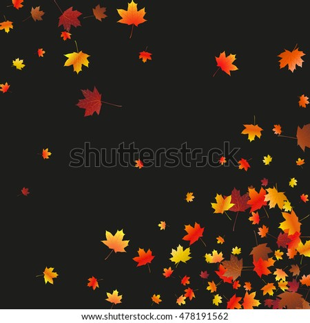Abstract background with flying maple leaves. Fall season greeting card, poster, flyer blank templates. Vector illustration isolated on a black background.