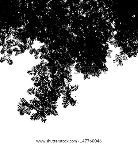 Abstract background with leaves silhouette of Mountain Ash, black and white vector illustration - stock vector