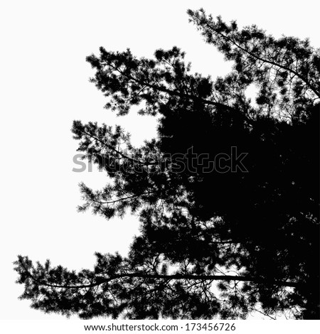 Abstract background with leaves silhouette of Pine Tree  - stock vector