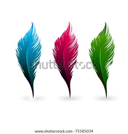 Abstract color feathers isolated on white background - stock vector