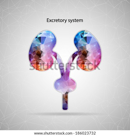 Abstract Creative concept vector icon of renal system for Web and Mobile Applications isolated on background. Vector illustration template design, Business infographic and social media, origami icons. - stock vector