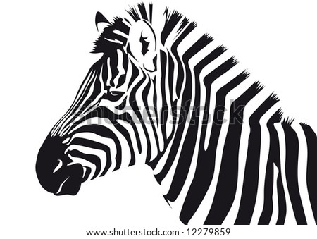 Abstract vector illustration of a zebra - stock vector