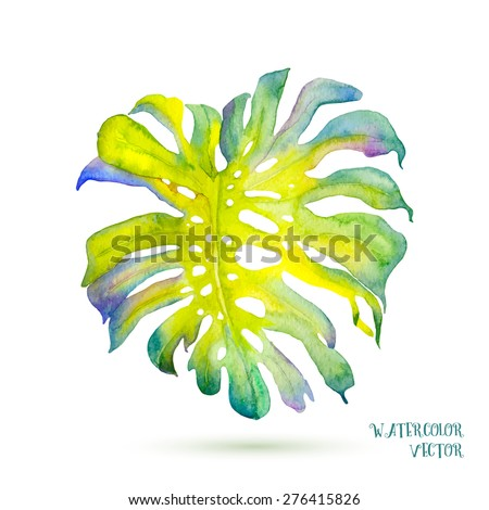 Abstract watercolor vector monstera leaves.  Colorful watercolour illustration of a tropical leaf.  - stock vector