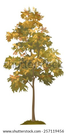Acacia autumnal tree with leaves and grass, isolated on white background. Vector - stock vector