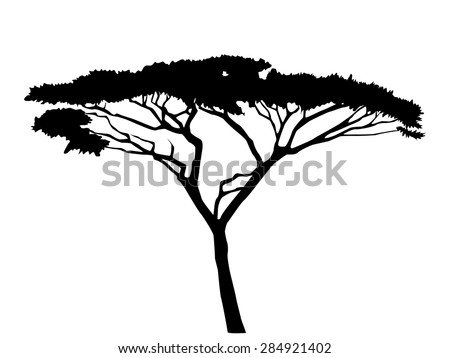 acacia tree silhouette - stock vector