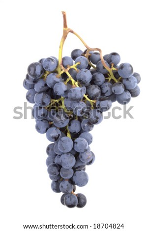 Accurate and realistic Pinot Noir grape cluster from a winery. Isolated. VECTOR.