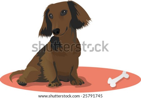 adorable miniature dachshund - stock vector