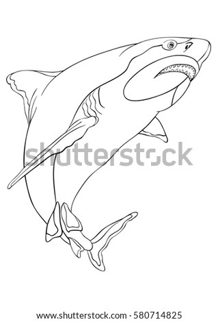 Adult Coloring Bookshark Freehand Sketch Adult Stock Vector (2018 ...