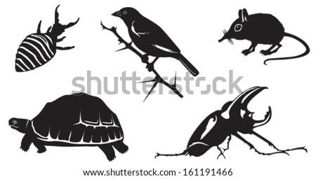 Africa's Little Five: Elephant Shrew, Ant-lion, Leopard Tortoise, Buffalo Weaver Bird and Rhino Beetle. - stock vector