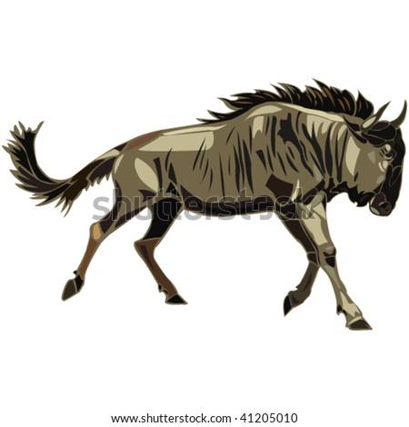 African Animals series Wildebeest - stock vector