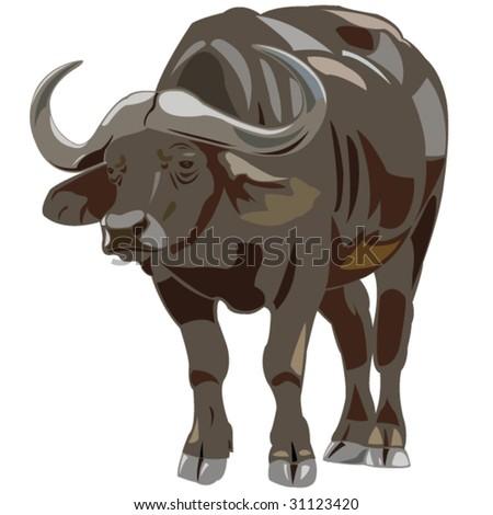 African buffalo - stock vector
