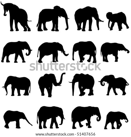 African elephants are the largest land mammal