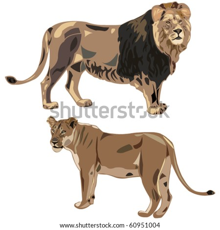 African lions and lioness - stock vector