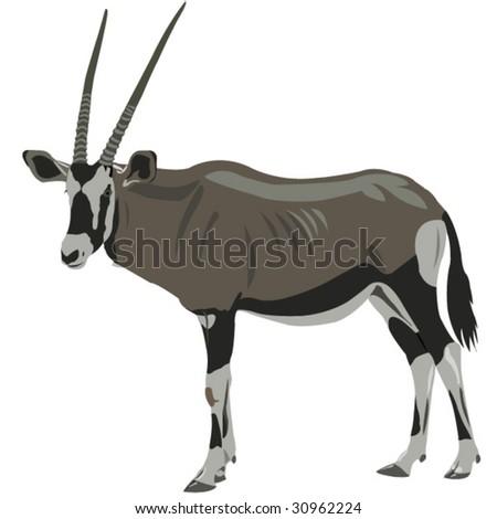 African oryx - stock vector