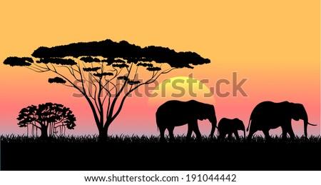 African savanna an evening landscape  - stock vector