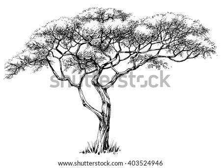 African tree, marula tree - stock vector