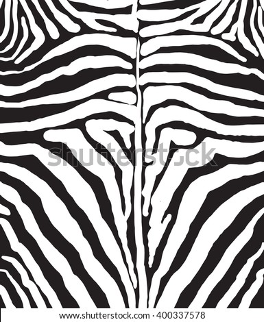 African zebra pelt background black and white zebra stripes zebra template zebra pattern