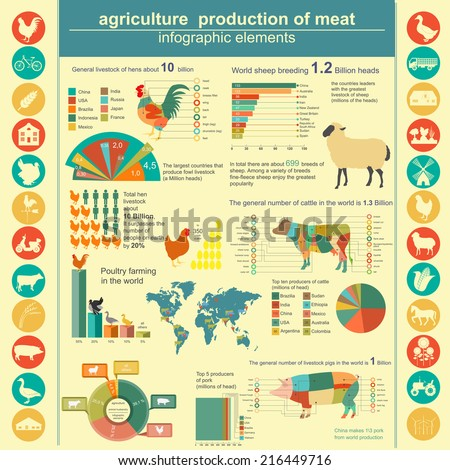 Agriculture, animal husbandry infographics. Vector illustration - stock vector