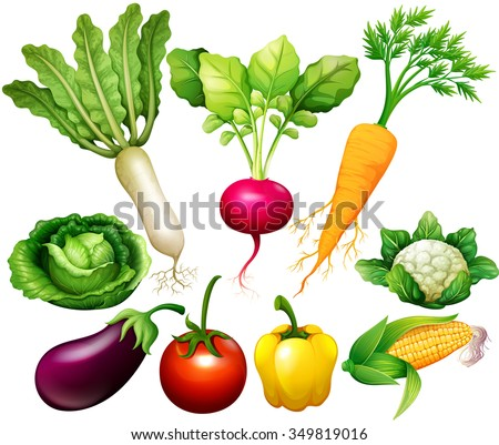 All kind of vegetables illustration - stock vector