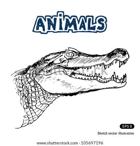 Alligator. Hand drawn sketch illustration isolated on white background - stock vector