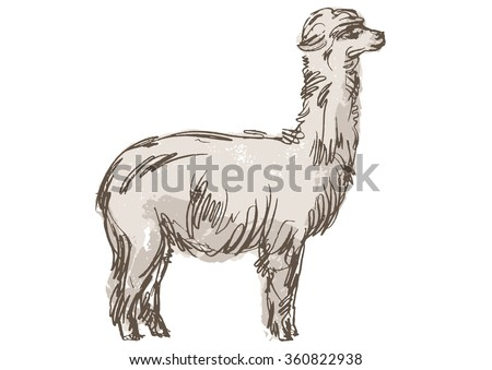 how to draw a realistic llama