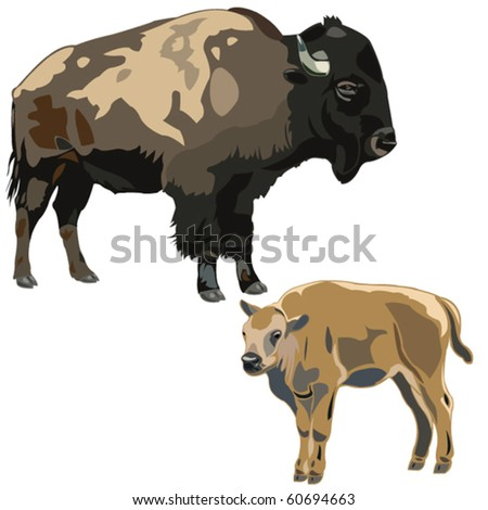 American bison Mother and Child - stock vector