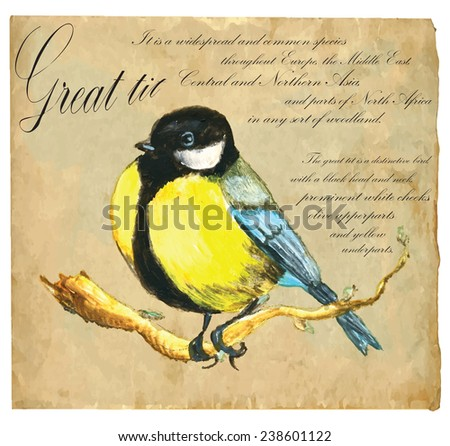 An hand painted illustration into vector picture. Bird: Great Tit - stock vector