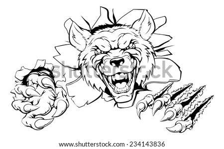 An illustration of a tough looking wolf animal sports mascot or character breaking through - stock vector