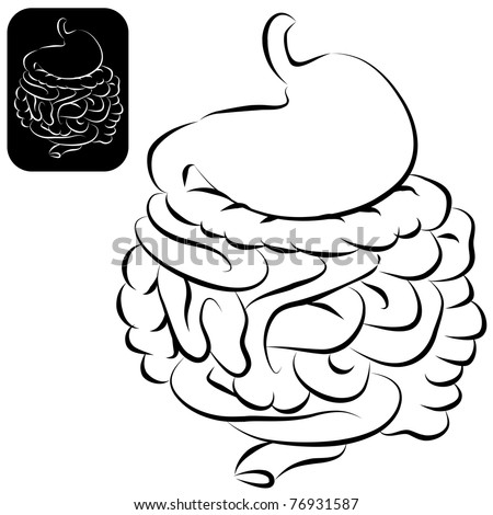 An image of a human digestive system in a calligraphic brushstroke style. - stock vector
