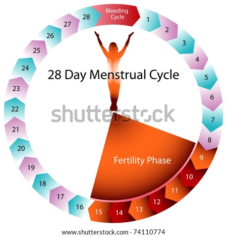 Image menstrual cycle chart stock vector 74110774 shutterstock