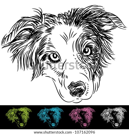 An image of border collie face set.