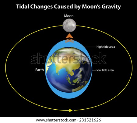 An image showing the tidal changes caused by the moon's gravity - stock vector