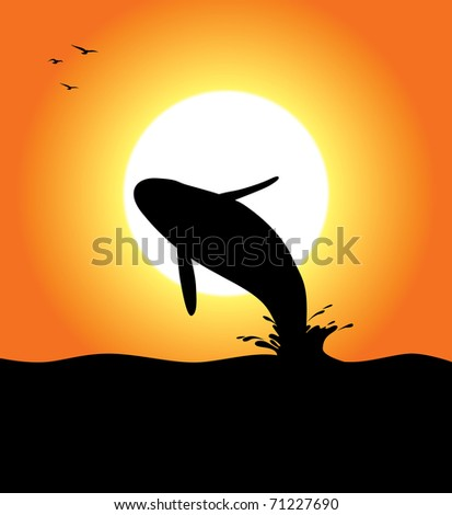 An orca whale silhouette jumping at sunset. Editable vector illustration. - stock vector