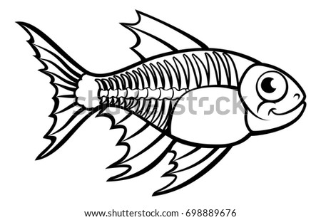 X Ray Tetra Stock Images Royalty Free Images Vectors Shutterstock
