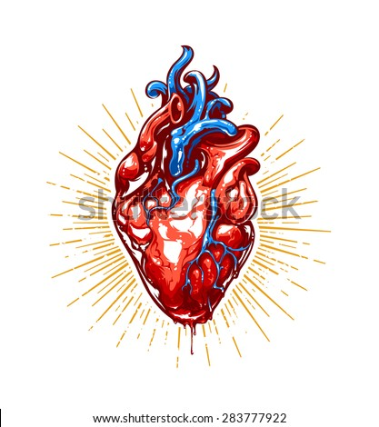 Anatomical heart with beams. Vector art. - stock vector