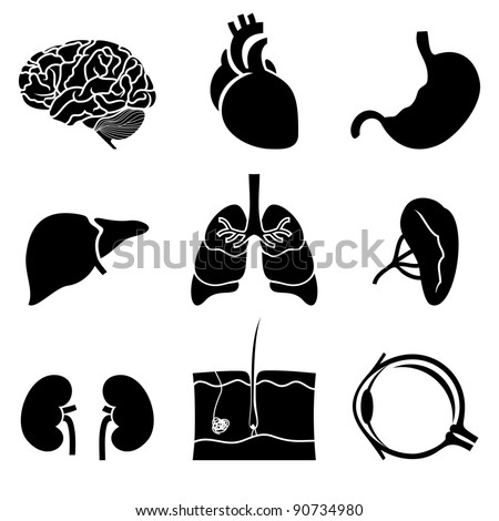 anatomical icons - stock vector